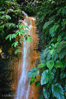 Waterfall in Tobago Forest Reserve, Tobago, West Indies: 899_9968