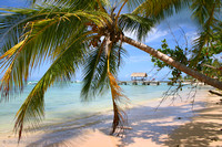 One of the many endless beaches of Tobago, West Indies: 900_0002