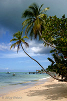 One of the many endless beaches of Tobago, West Indies: 900_0013