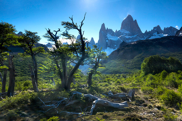 View with Cerro Fitz Roy  - DSC07496