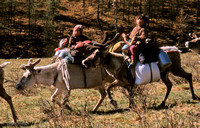 Reindeer herder's children on the move, Northern Mongolia: MPgRei.4_14
