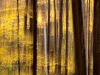 Abstract in New Hampshire forest: IMG_0926