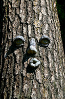 Face on Tree: 902_0215_2